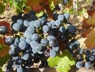 Domaine viticole Le Domaine des Cabridelles à Ispagnac